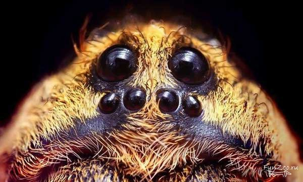 Пауки - это насекомые?