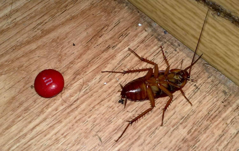 Тараканы без головы