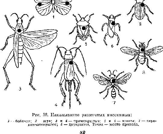 Размягчение сухих насекомых