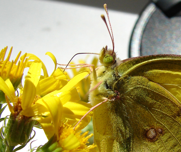 Какую пользу приносят бабочки