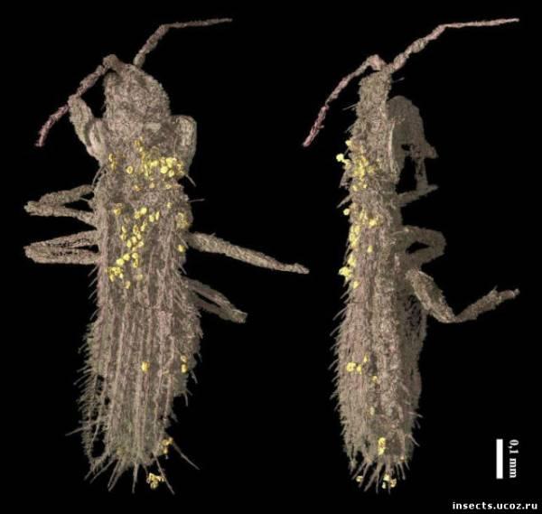 Янтарь рассказал учёным о самом древнем насекомом-опылителе.
