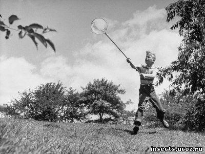 Как ловить бабочек сачком