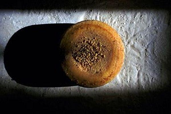 Сыр с личинками сырной мухи