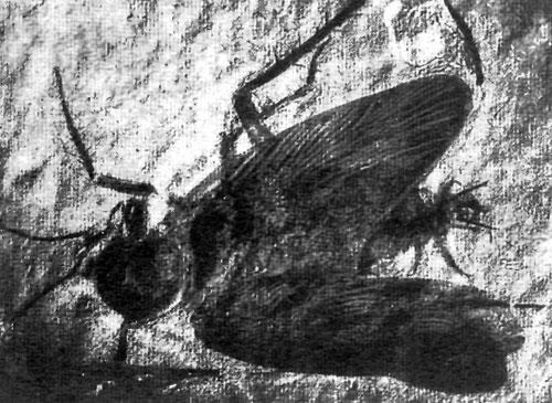Очистка насекомых