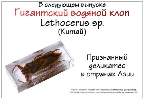 Этикетки дляэнтомологических коллекций