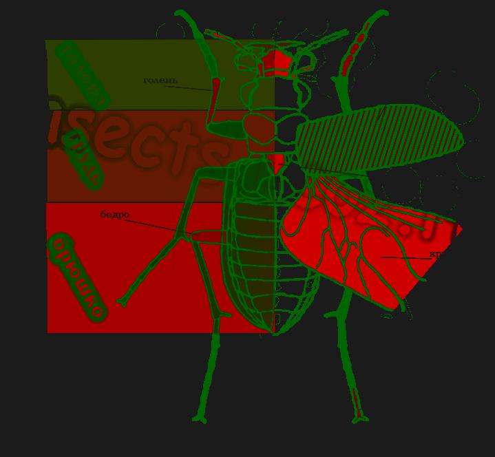 Шершень обыкновенный оса